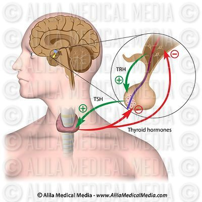 Endocrinology Images and Videos images