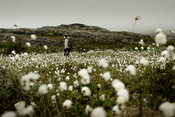 Woman hiking in cotton grass field