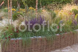 Fotoflor toutes les photos et images de plantes fleurs jardins sur le th me vivace - Bordure jardin tressee ...