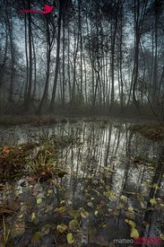 Forest and swamp in the mist, north Italy
