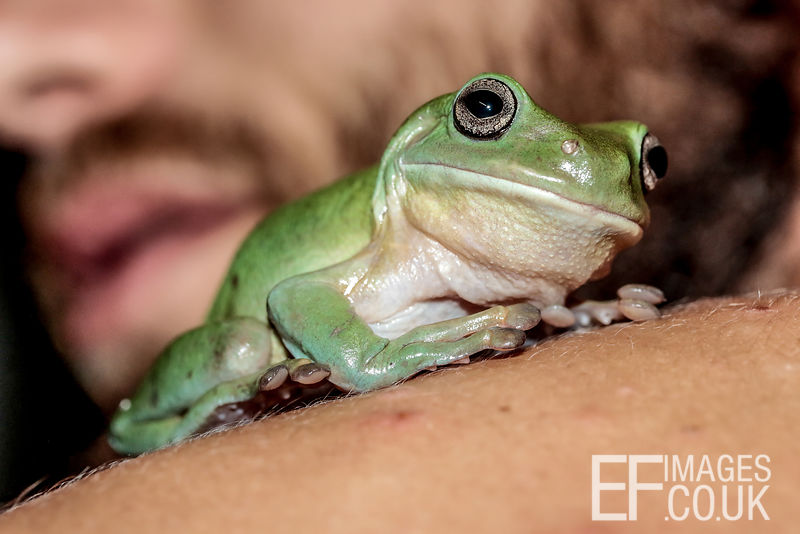 Man With A frog On His Shoulder