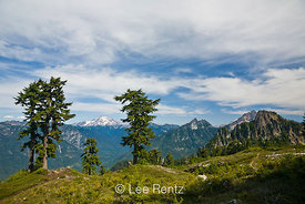 Mountain Hemlocks (Tsuga mertensiana) with Glacier Peak and other Cascade peaks in the distance from Mt. Forgotten Meadows, Mt. Baker-Snoqualmie National Forest, Cascade Mountains, Washington, USA, August, 2008_WA_4600