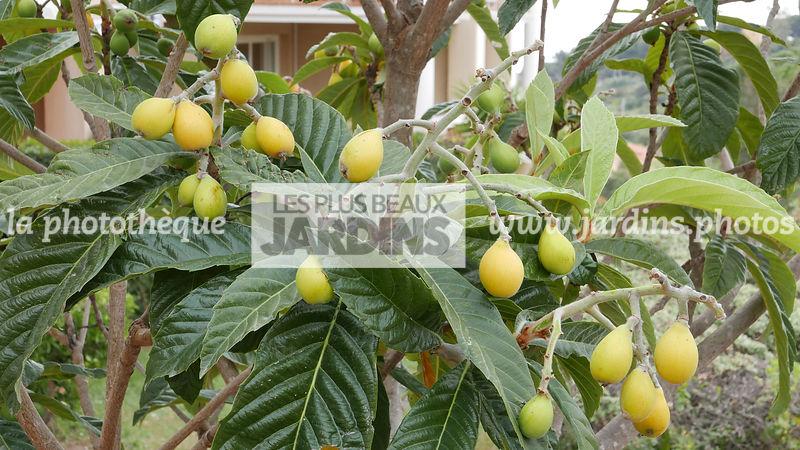 la phototh que les plus beaux jardins arbres fruitiers. Black Bedroom Furniture Sets. Home Design Ideas