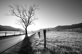 CADES COVE LOOP ROAD SUNRISE SMOKY MOUNTAINS BLACK AND WHITE