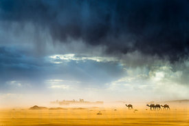 Storm, wind, rain, sand, camels and incredible light in the desert