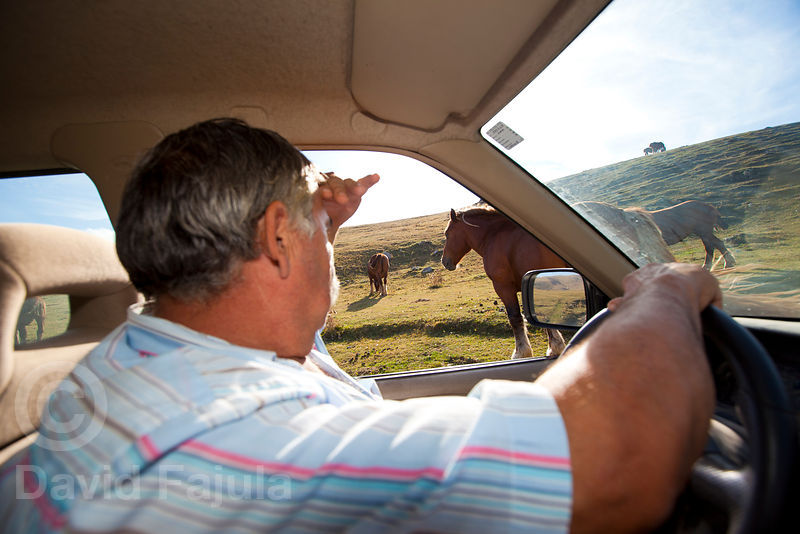 Eyeing a horse herd from a car