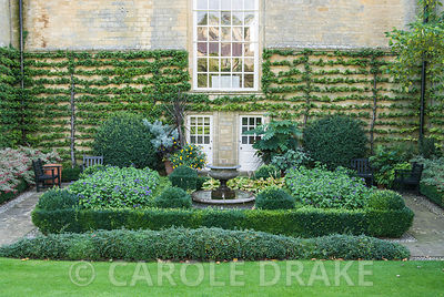 Neatly wall trained pyracantha in the Fountain garden with lushly planted containers including Melianthus major, cordylines, aeoniums, Xerochrysum bracteatum 'Dargan Hill Monarch', tetrapanax and fuchsia. Bourton House, Bourton-on-the-Hill, Moreton-in-Marsh, Glos, UK