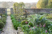 Brick paths in the kitchen garden pass bed full of new silvery foliage of cardoons, self seeded forget-me-nots, clipped box and sugar pink tulip 'Ballade'. Brilley Court Farm, Whitney-on-Wye, Herefordshire, UK