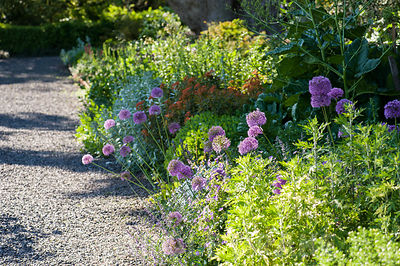 The terrace border is planted with drought tolerant, sun loving specimens including alliums, euphorbias and artemisias.