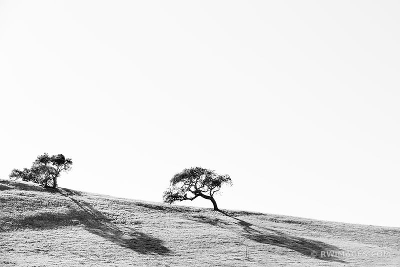 OAK TREES HILL SANTA YNEZ VALLEY SANTA BARBARA COUNTY BLACK AND WHITE