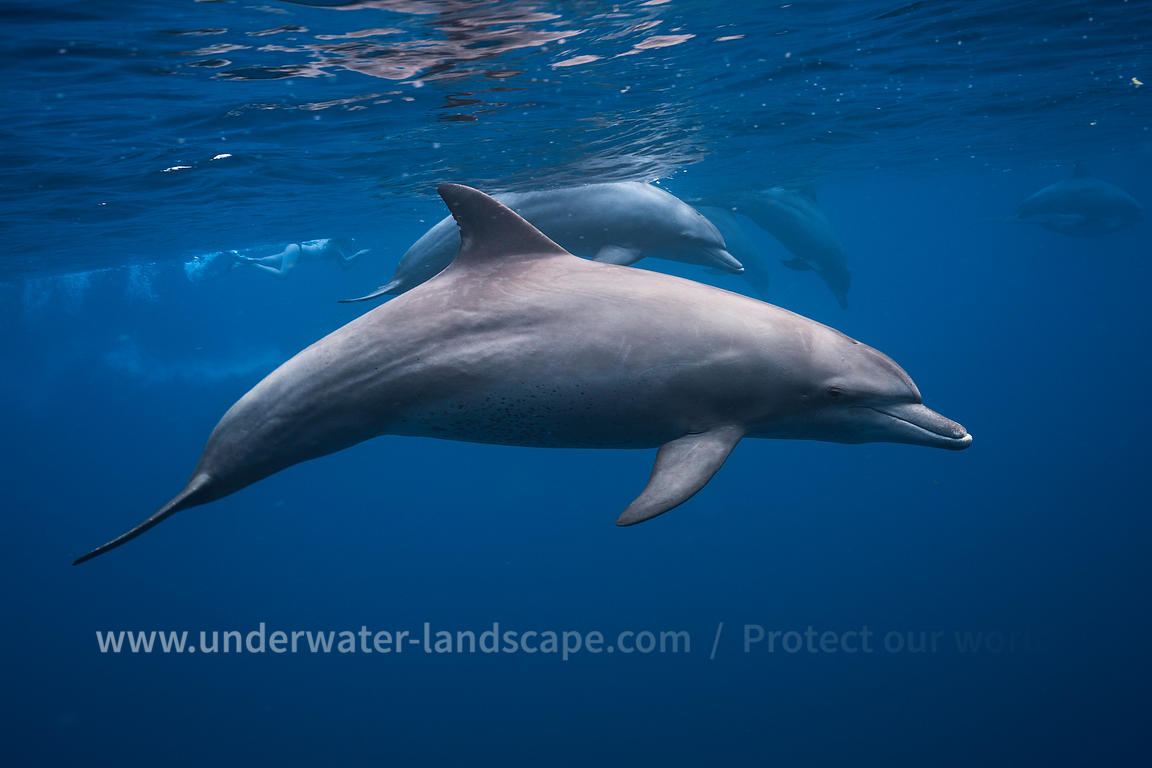 Photo de dauphins à Mayotte