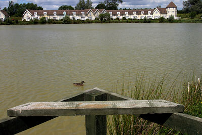A duck on the lake at The Watermark, A Gated Community, near Cirencester, UK