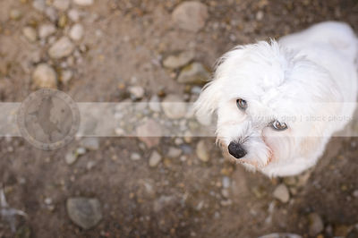 closeup of little fluffy dog on beach with cute expression