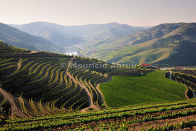 Terraced vineyards in the Quinta de Ventozelo, Douro region, a Unesco World heritage site. Pinhão can be seen on the horizon.