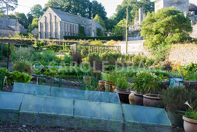 Walled kitchen garden, once part of the abbey, with 13th century Great Barn of Buckland Abbey rising above. The Cider House, Buckland Abbey, Yelverton, Devon, UK