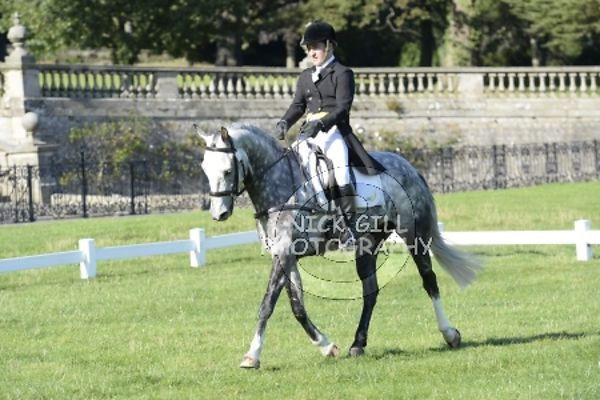 Dressage 1500-1600 photos