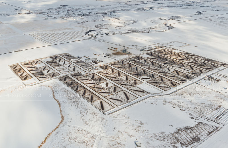 Feedlot in Winter