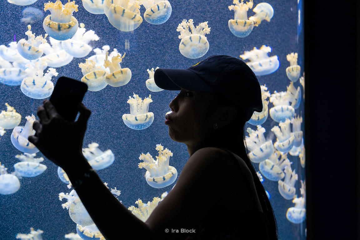 A tourist takes selfie with the sea jellies at the Underwater World in Sentosa Island, Singapore
