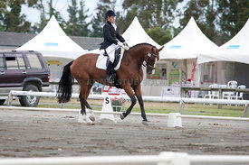SI_Dressage_Champs_260114_039