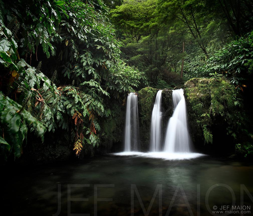 Waterfall in lush forest