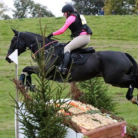 Cass and Not Another Cavalier at Aldon photos