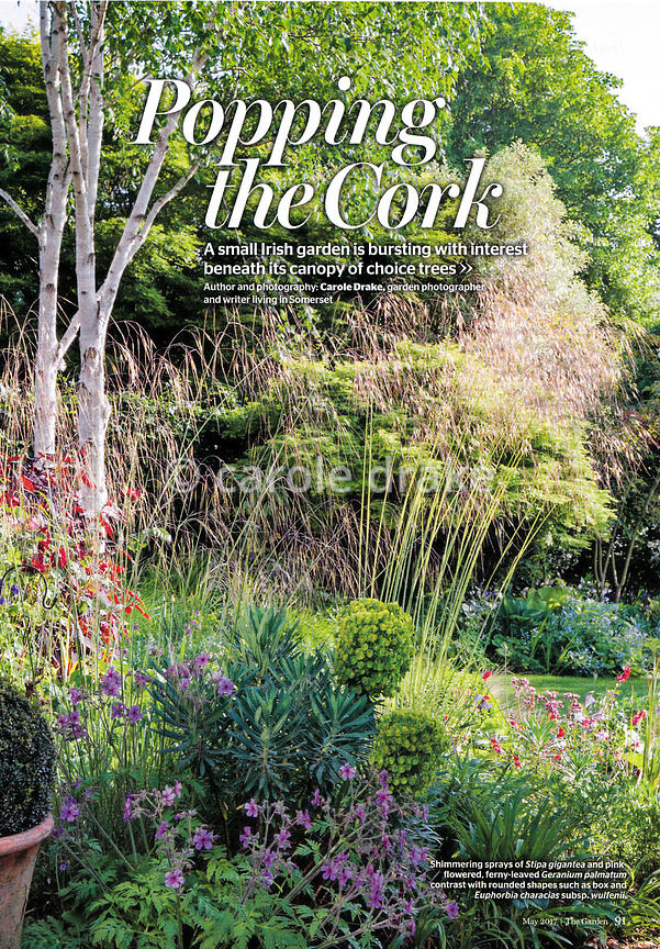 Coosheen, The Garden, May photographs