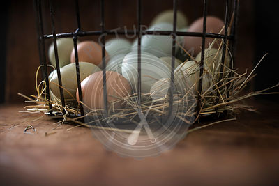 Fresh, multi-colored eggs in metal basket with hay on a rustic wood surface.