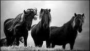 Three wild horses on top of the hill, Iceland 2015 © Laurent Baheux