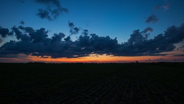 Wide Shot: Sunrise Above Layered Cloud Decks & Flat Rows of Growing Soybeans (Night To Day)