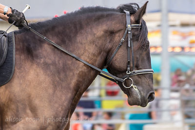 SACRAMENTO, CA, 23 JULY 2013:  Calvacade of Horses at California State Fair, Sacramento, July 2013
