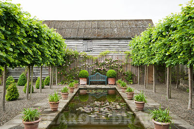 The Canal, framed by pleached limes and pots of agapanthus, with seat at end surrounded by pink Rosa 'Albertine' on right and Rosa 'Paul's Himalayan Musk' on the left. Ashley Farm, Stansbatch, Herefordshire, UK