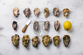 Assorted fresh Oysters, knife and lemon on light background