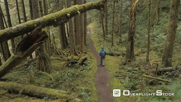 Hiker on trail in Coniferous forest near Port Angeles, WA.