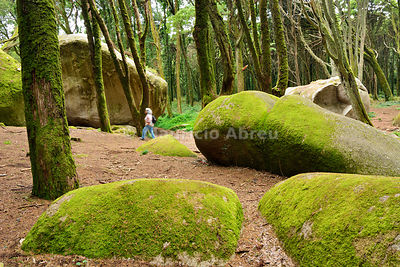 Forest of the Sintra-Cascais Natural Park, a Unesco World Heritage Site. Portugal (MR)