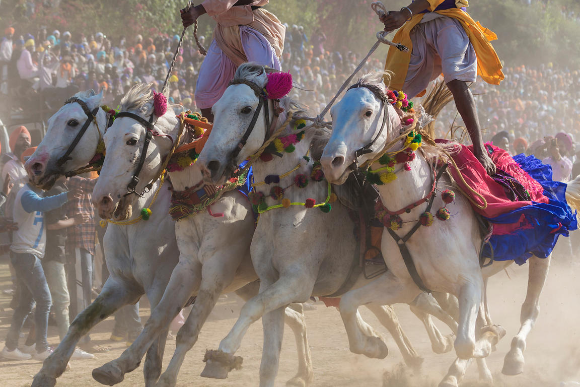 Two Nihang Sikh Warriors Ride Four Horses at one Time During the Horse Games