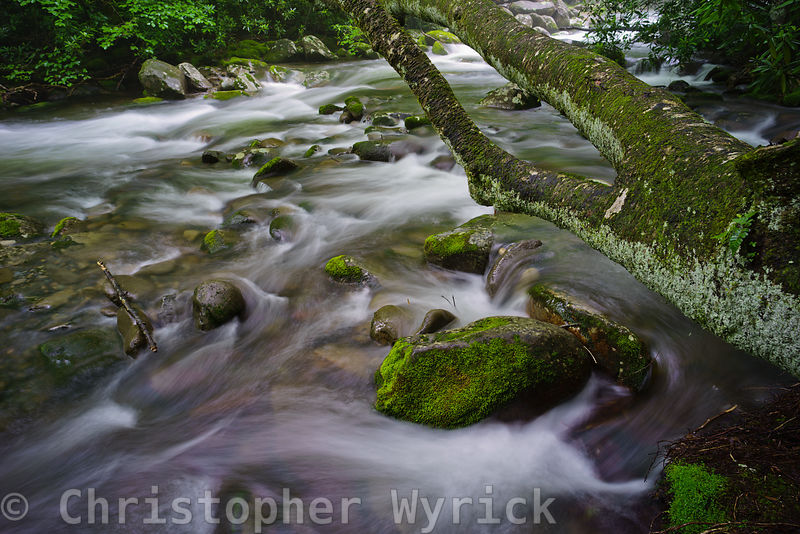 Beautiful image of the Little Pigeon River.  Amazing detail on the tree overhanging the softly flowing river highlight this image.