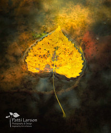 Golden Leaf on Pond
