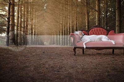 large white hound sleeping on antique settee on forest trail