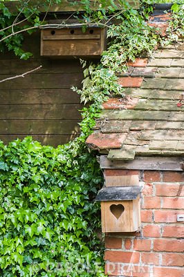 Nest boxes for birds amongst ivy.