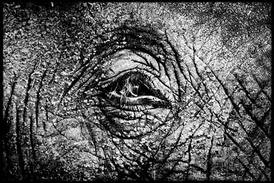 7866-Eye_of_elephant_Laurent_Baheux