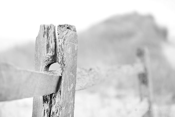 WEATHERED FENCE FIRST ENCOUNTER BEACH EASTHAM CAPE COD MASSACHUSETTS BLACK AND WHITE