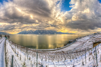 Snowy white vineyards with the Alps and Leman lake
