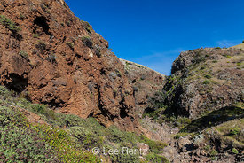 Scorpion Canyon on Santa Cruz Island