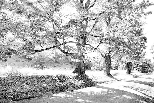 COUNTRY ROAD ON A SUNNY SUMMER DAY IN VERMONT BLACK AND WHITE