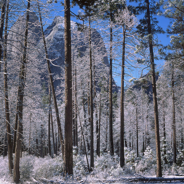047-California_CA141082_Yosemite_Snow_Storm_018_Preview