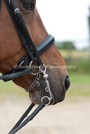 Double bridle bit & reins