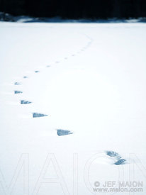 Tracks on snow
