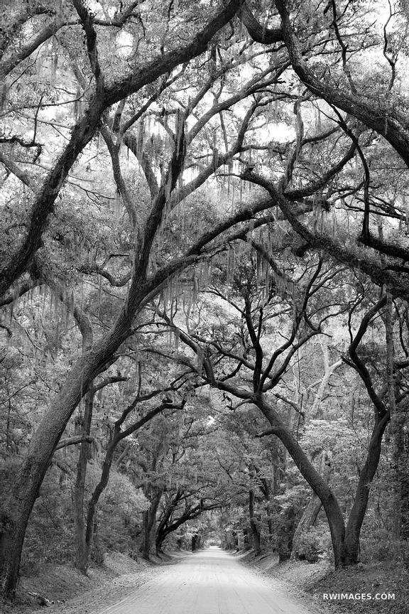 BOTANY BAY ROAD EDISTO ISLAND SOUTH CAROLINA BLACK AND WHITE VERTICAL