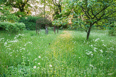 Dawn sunlight illuminates a path of long grass in the meadow, full of buttercups, cow parsley and ox-eye daisies. King John's Nursery, Etchingham, East Sussex, UK