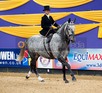 HOYS Ladies Hunter photos